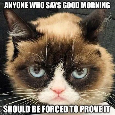 Good Morning Memes Cat